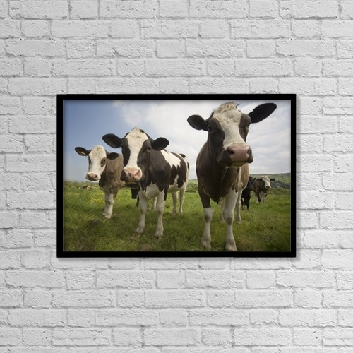 "Printscapes Wall Art: 18"" x 12"" Canvas Print With Black Frame - Holstein-Friesian Cattle by John Short"