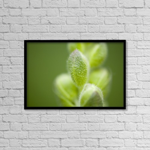 """Printscapes Wall Art: 18"""" x 12"""" Canvas Print With Black Frame - Close-Up Of Flower Buds by Craig Tuttle"""