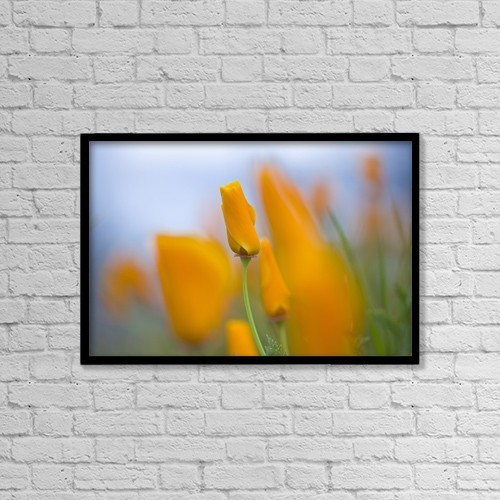 """Printscapes Wall Art: 18"""" x 12"""" Canvas Print With Black Frame - Furled Poppies by Craig Tuttle"""
