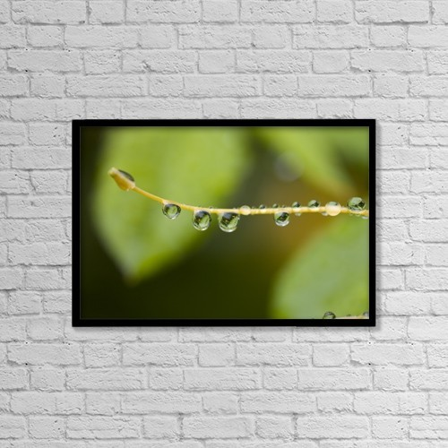 """Printscapes Wall Art: 18"""" x 12"""" Canvas Print With Black Frame - Closeup Of Dew On A Stamen by Craig Tuttle"""