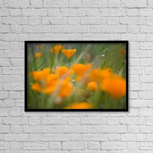 "Printscapes Wall Art: 18"" x 12"" Canvas Print With Black Frame - Close Up Of Orange Poppy Flowers by Craig Tuttle"