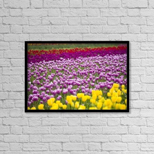 "Printscapes Wall Art: 18"" x 12"" Canvas Print With Black Frame - A Tulip Field by Craig Tuttle"