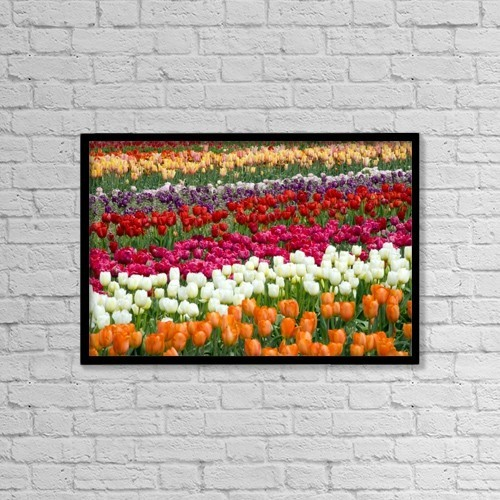 """Printscapes Wall Art: 18"""" x 12"""" Canvas Print With Black Frame - A Tulip Field by Craig Tuttle"""