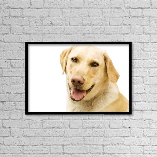 """Printscapes Wall Art: 18"""" x 12"""" Canvas Print With Black Frame - A Golden Labrador by Chris and Kate Knorr"""
