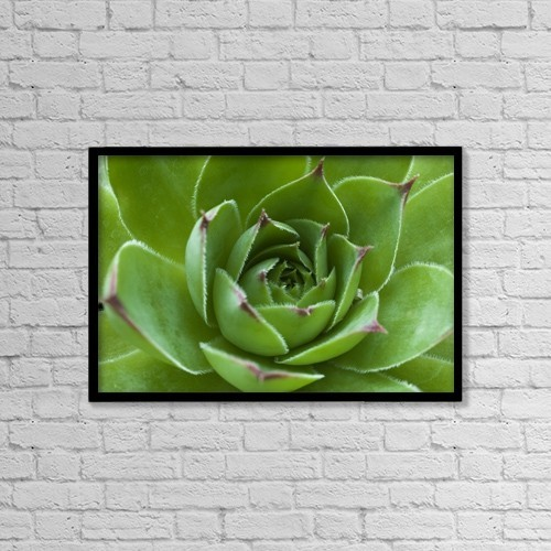 "Printscapes Wall Art: 18"" x 12"" Canvas Print With Black Frame - Cactus by David Chapman"