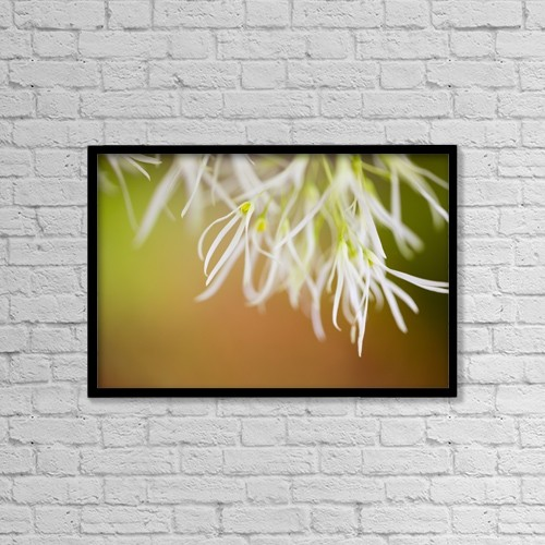 "Printscapes Wall Art: 18"" x 12"" Canvas Print With Black Frame - Delicate Petals by Craig Tuttle"