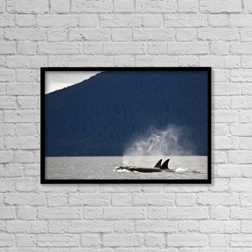 "Printscapes Wall Art: 18"" x 12"" Canvas Print With Black Frame - Killer Whales, Alaska, Usa by Richard Wear"
