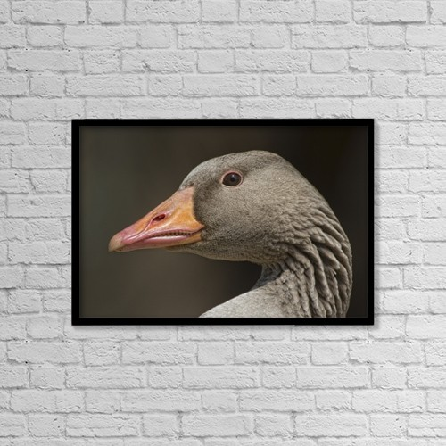 "Printscapes Wall Art: 18"" x 12"" Canvas Print With Black Frame - Closeup Of Goose by John Short"