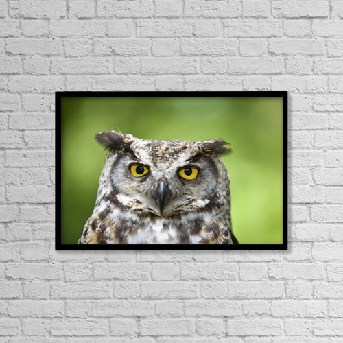 "Printscapes Wall Art: 18"" x 12"" Canvas Print With Black Frame - Great Horned Owl (Bubo Virginianus) by Deddeda"
