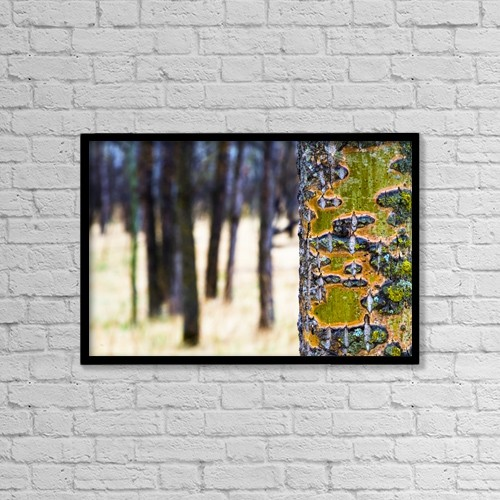 "Printscapes Wall Art: 18"" x 12"" Canvas Print With Black Frame - Tree Trunk With Bare Trees In The Distance by Richard Wear"