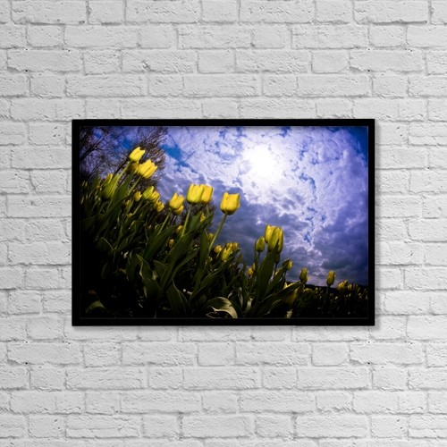 """Printscapes Wall Art: 18"""" x 12"""" Canvas Print With Black Frame - Yellow Tulips by Richard Wear"""