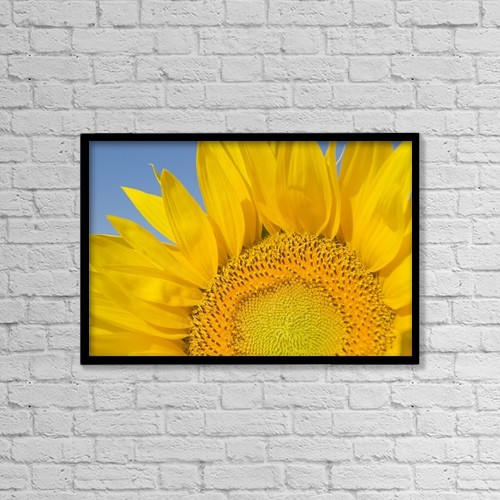 "Printscapes Wall Art: 18"" x 12"" Canvas Print With Black Frame - Sunflower (Helianthus Annuus) by Michael Thornton"
