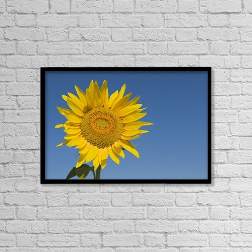 "Printscapes Wall Art: 18"" x 12"" Canvas Print With Black Frame - Sunflower, Helianthus Annuus by Michael Thornton"