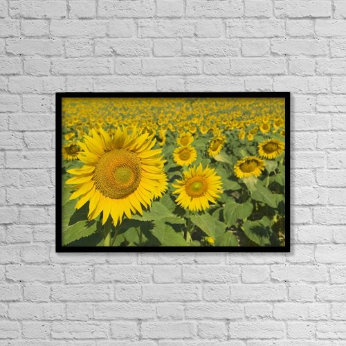 """Printscapes Wall Art: 18"""" x 12"""" Canvas Print With Black Frame - Flowers by Michael Thornton"""