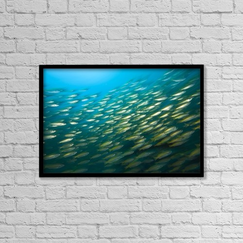 "Printscapes Wall Art: 18"" x 12"" Canvas Print With Black Frame - Bigeye Snappers (Lutjanus Lutjanus) by Stuart Westmorland"