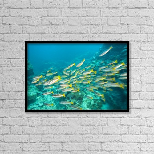 "Printscapes Wall Art: 18"" x 12"" Canvas Print With Black Frame - Schooling Bigeye Snappers by Stuart Westmorland"