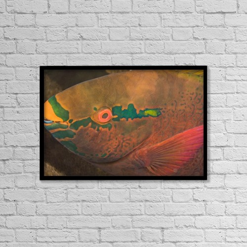 "Printscapes Wall Art: 18"" x 12"" Canvas Print With Black Frame - Parrotfish (Scaridae) by Stuart Westmorland"