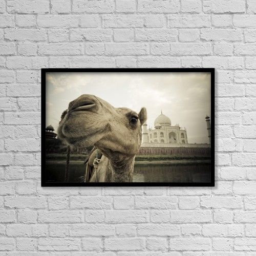 "Printscapes Wall Art: 18"" x 12"" Canvas Print With Black Frame - Animals by David DuChemin"