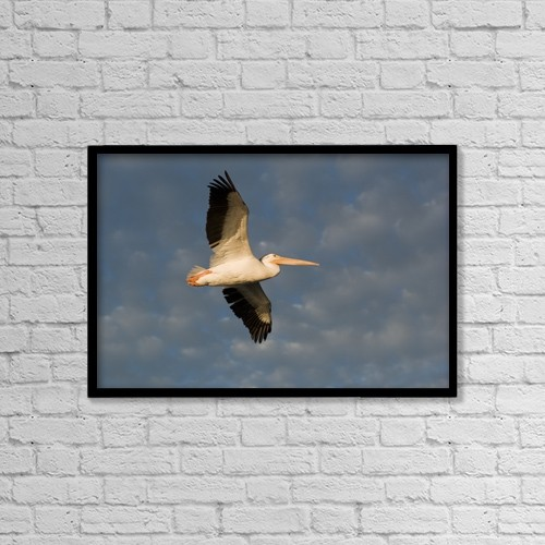 """Printscapes Wall Art: 18"""" x 12"""" Canvas Print With Black Frame - Animals by Keith Levit"""
