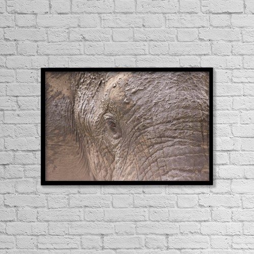 """Printscapes Wall Art: 18"""" x 12"""" Canvas Print With Black Frame - Animals by Stuart Westmorland"""