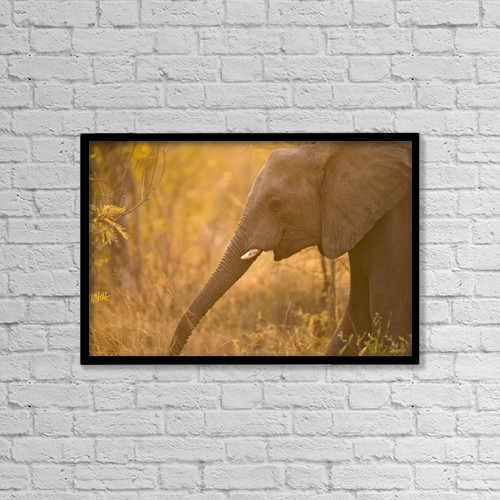 "Printscapes Wall Art: 18"" x 12"" Canvas Print With Black Frame - Animals by Stuart Westmorland"