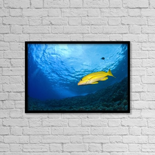 """Printscapes Wall Art: 18"""" x 12"""" Canvas Print With Black Frame - Marine Life by Stuart Westmorland"""