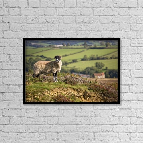 """Printscapes Wall Art: 18"""" x 12"""" Canvas Print With Black Frame - Sheep, North Yorkshire, England by John Short"""