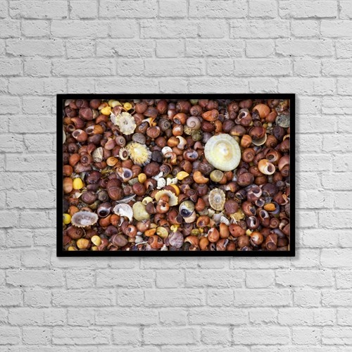 "Printscapes Wall Art: 18"" x 12"" Canvas Print With Black Frame - Sea Shells by John Short"