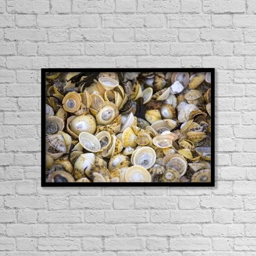 "Printscapes Wall Art: 18"" x 12"" Canvas Print With Black Frame - Sea Shells by John Short"