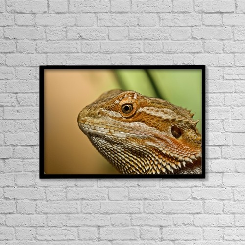 "Printscapes Wall Art: 18"" x 12"" Canvas Print With Black Frame - Bearded Dragon Lizard (Pogona) by John Short"