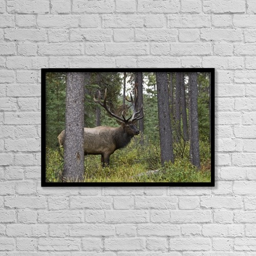 "Printscapes Wall Art: 18"" x 12"" Canvas Print With Black Frame - Animals by Philippe Widling"