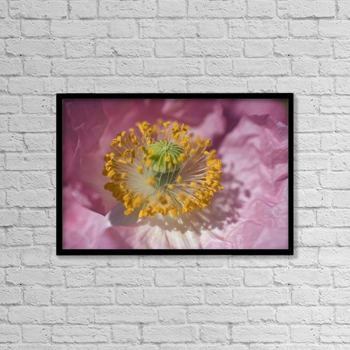 "Printscapes Wall Art: 18"" x 12"" Canvas Print With Black Frame - Shirley Poppy by Craig Tuttle"