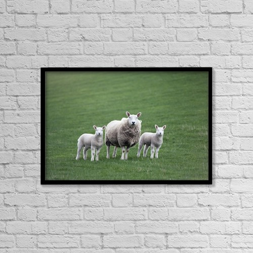 "Printscapes Wall Art: 18"" x 12"" Canvas Print With Black Frame - Mother Sheep And Lambs by John Short"
