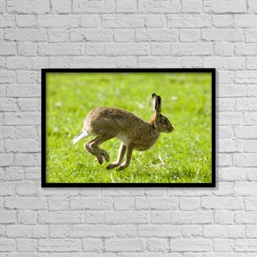 "Printscapes Wall Art: 18"" x 12"" Canvas Print With Black Frame - Hare Hopping In The Grass by John Short"