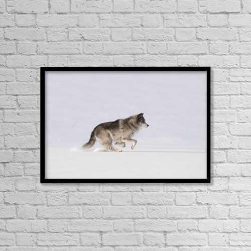 "Printscapes Wall Art: 18"" x 12"" Canvas Print With Black Frame - Wolf Running In The Snow by Philippe Widling"