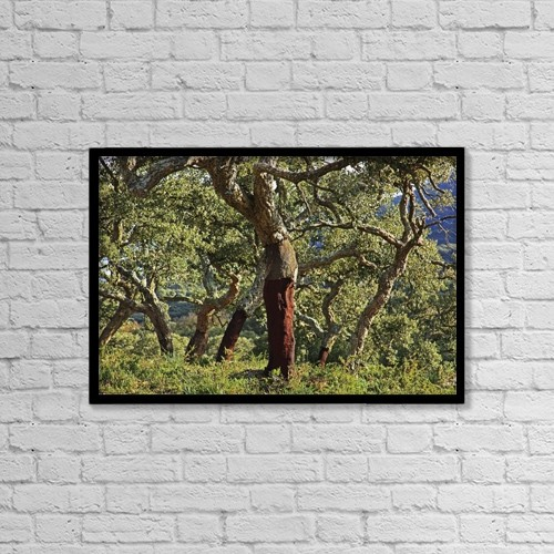 "Printscapes Wall Art: 18"" x 12"" Canvas Print With Black Frame - Old Cork Oak Tree; Andalucia, Spain by Peter Zoeller"
