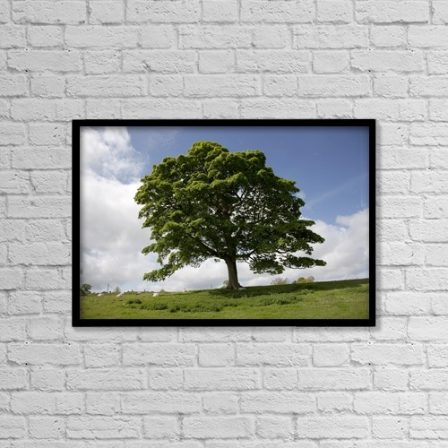 """Printscapes Wall Art: 18"""" x 12"""" Canvas Print With Black Frame - Tree; Northumberland, England by John Short"""