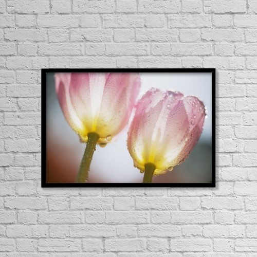 "Printscapes Wall Art: 18"" x 12"" Canvas Print With Black Frame - Dew On Tulips by Craig Tuttle"