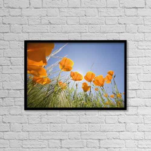 "Printscapes Wall Art: 18"" x 12"" Canvas Print With Black Frame - Orange Poppies by Craig Tuttle"
