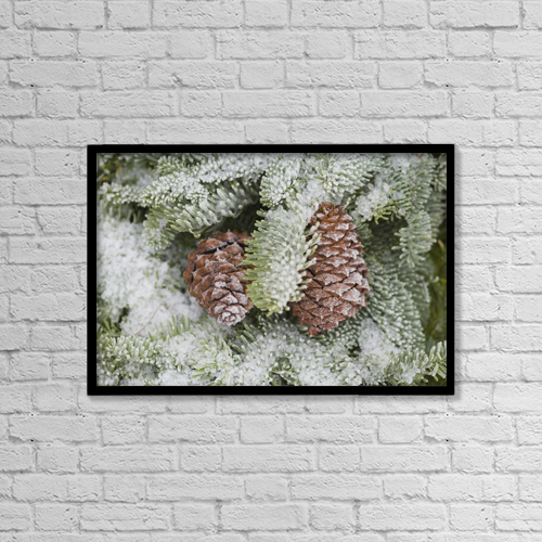 """Printscapes Wall Art: 18"""" x 12"""" Canvas Print With Black Frame - Frost On Pine Cones by Craig Tuttle"""