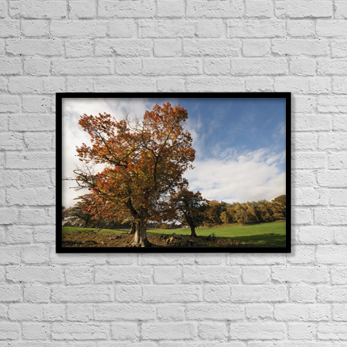 "Printscapes Wall Art: 18"" x 12"" Canvas Print With Black Frame - Trees, Northumberland, England by John Short"