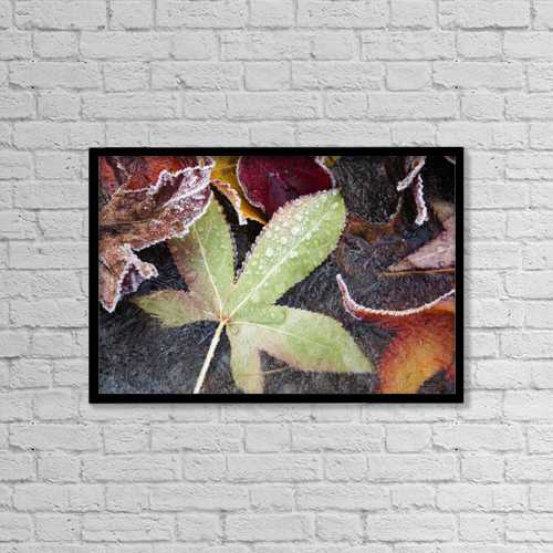 "Printscapes Wall Art: 18"" x 12"" Canvas Print With Black Frame - Autumn Colored Leaves Frozen In A Creek by Craig Tuttle"