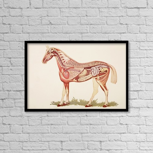"Printscapes Wall Art: 18"" x 12"" Canvas Print With Black Frame - Internal Organs Of A Horse by Ken Welsh"