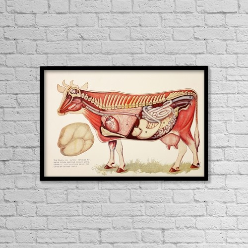 "Printscapes Wall Art: 18"" x 12"" Canvas Print With Black Frame - Animals by Ken Welsh"