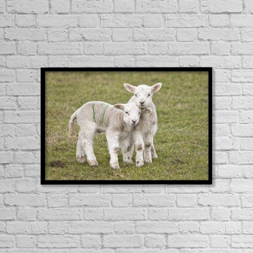 """Printscapes Wall Art: 18"""" x 12"""" Canvas Print With Black Frame - Northumberland, England; Two Lambs by John Short"""