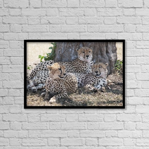 """Printscapes Wall Art: 18"""" x 12"""" Canvas Print With Black Frame - Leopards, Kenya, Africa by Keith Levit"""