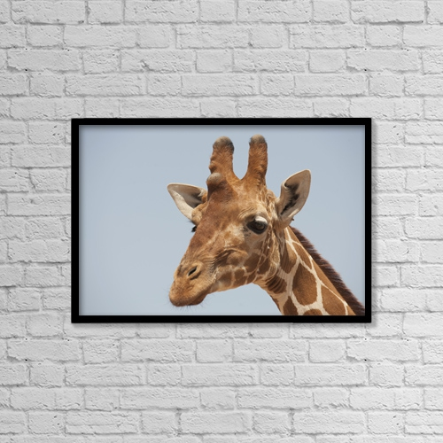 "Printscapes Wall Art: 18"" x 12"" Canvas Print With Black Frame - Giraffe by Keith Levit"