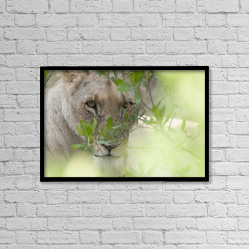 "Printscapes Wall Art: 18"" x 12"" Canvas Print With Black Frame - Lioness, Kenya, Africa by Keith Levit"