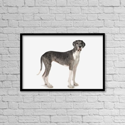 "Printscapes Wall Art: 18"" x 12"" Canvas Print With Black Frame - Great Dane Dog by Corey Hochachka"