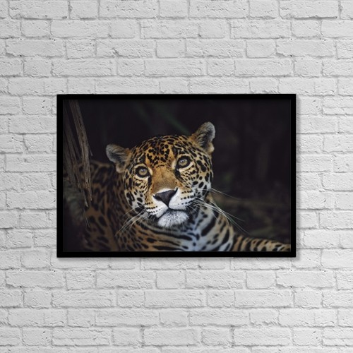 "Printscapes Wall Art: 18"" x 12"" Canvas Print With Black Frame - Jaguar (Panthera Onca); Belize by David Ponton"
